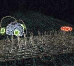 Spiders at the nanoscale: Molecules that behave like robots