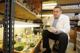 Stacking traits in algae is focus of grant to Iowa State University researcher