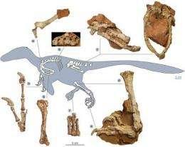 'Stocky dragon' dinosaur terrorized Late Cretaceous Europe