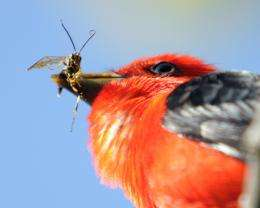 Study Affirms Importance of Insect-Eating Animals to Ecosystem Health