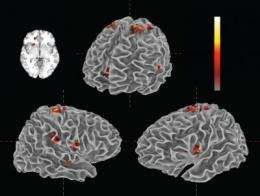 Study links emotional and neural responses to musical performance