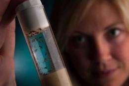 Study of flies proves fruitful
