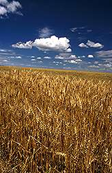 Summer fallow stores water in central great plains