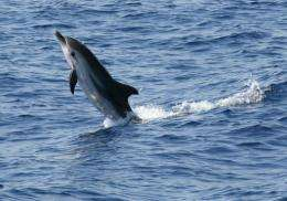 Taiwan plans to use DNA from whales and dolphins as evidence to convict poachers and protect the endangered animals