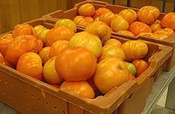 Tangerine Tomatoes Surpass Reds