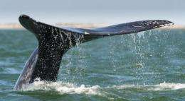 """The new law is aimed at helping to curb a """"growing amount of illegal whale hunting"""" around South Korea"""