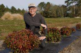 UF researchers identifying, developing noninvasive ornamental plant varieties