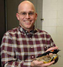 Wind farms force birds to fly the coop? ISU researcher wants to separate facts from hot air