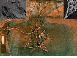 X-rays reveal chemical link between birds and dinosaurs