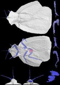 Creepy crawly cockroach ancestor revealed in new 3-D model