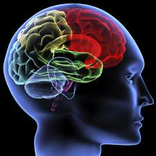 Brain biology may dictate social networks