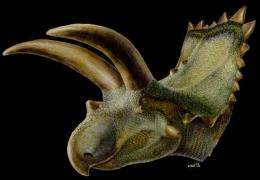 First horned dinosaur from Mexico