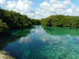 Pollutants in aquifers may threaten future of Mexico's fast-growing 'Riviera Maya'