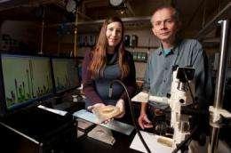Prehistoric fish extinction paved the way for modern vertebrates