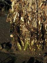 Shipworm threatens archaeological treasures