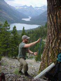 Traumatized trees: Bug them enough, they get fired up