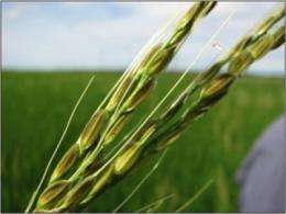 What plant genes tell us about crop domestication
