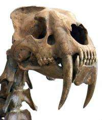 Why you should never arm wrestle a saber-toothed tiger