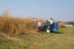 Yield projections for switchgrass as a biofuel crop