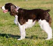 Study helps clarify tail injuries in dogs