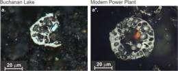 Researchers find smoking gun of world's biggest extinction