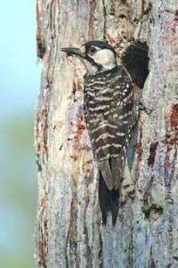 Extreme Weather Impacts Migratory Birds