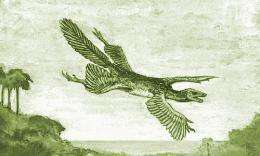 Study challenges bird-from-dinosaur theory of evolution - was it the other way around?