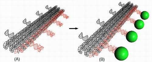 A 3-D model of a DNA nanostructure.