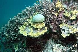 Coral reef at Heron Island. Photo: Ove Hoegh-Guldberg