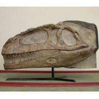 The newly discovered Mapusaurus roseae