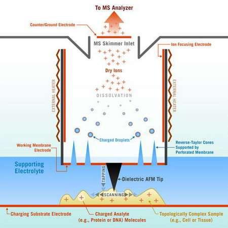 Nano probe may open new window into cell behavior
