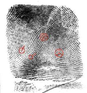 Using 'Minutiae' to Match Fingerprints Can Be Accurate