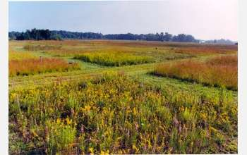 Ecosystems With Many Plant Species Produce More and Survive Threats Better