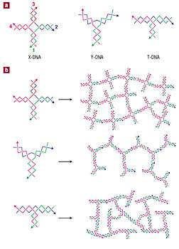 Synthetic DNA Makes Better Hydrogels for Drug Delivery