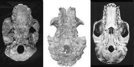 Earliest hominid: Not a hominid at all?