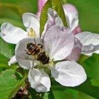 Probing Question: What's killing the honey bees?