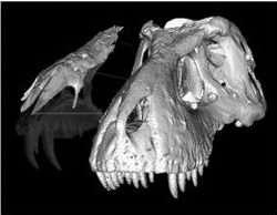 T-rex Nasal Bones