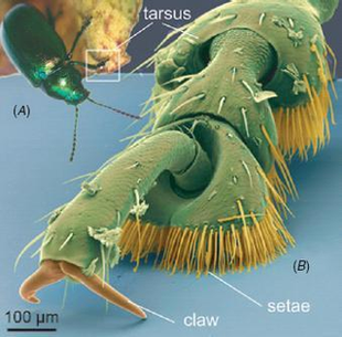 Sticky Tape Inspired by Insect Feet