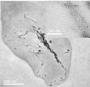 First Direct Images of Carbon Nanotubes Entering Cells