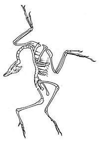Agonized pose tells of dinosaur death throes