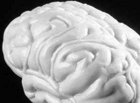 """Cognitive """"fog"""" of normal aging linked to brain system disruption"""