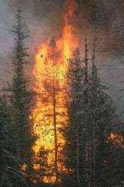 Fireproofing homes dramatically reduces forest fire size, according to new study