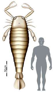 Giant fossil sea scorpion bigger than man