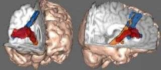 Renderings of the Brain's 'Braking' Network