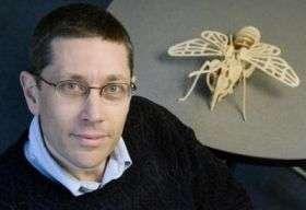 Researchers at Illinois explore queen bee longevity
