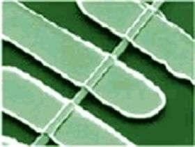 ZnO Nanowire Photodetector