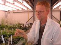 Biochemists devise method for bypassing aluminum toxicity effects in plants