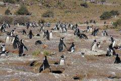A happy new year for penguins
