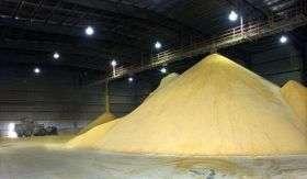 Dried Distiller's Grain