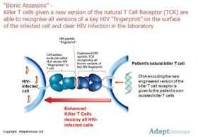 Engineered killer T cell recognizes HIV-1's lethal molecular disguises